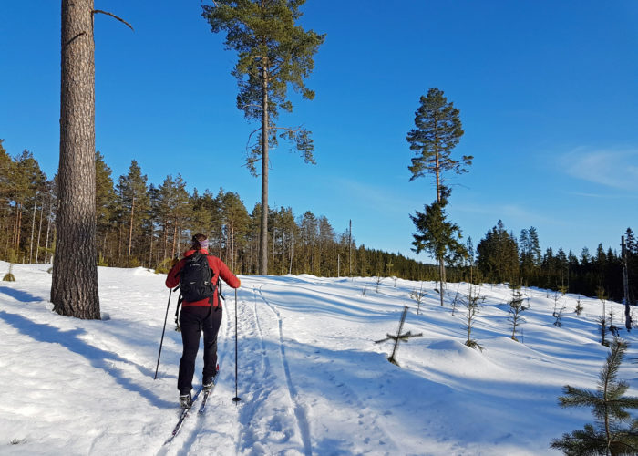 jente på skitur