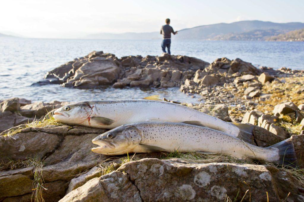 fiske njff