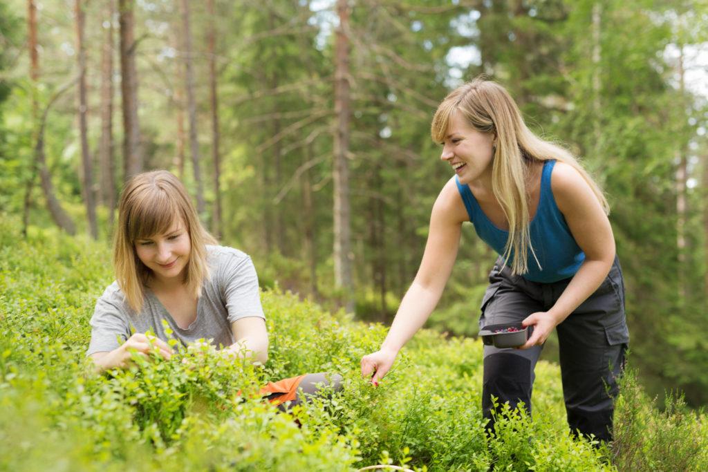 Bilde: To venniner står og sitter ved et blåbærkratt, de plukker blåbær og smiler.