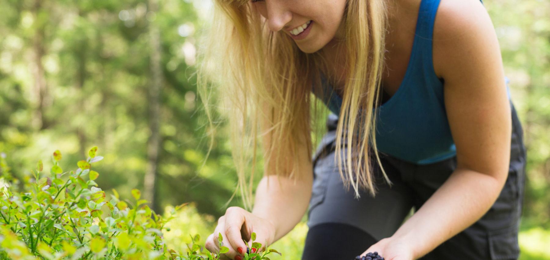Bilde: Kvinne plukker blåbær fra en blåbærbusk i skogen. Hun har på seg en blå topp, står bøyd over busken og smiler. Hånden er full av blåbær.