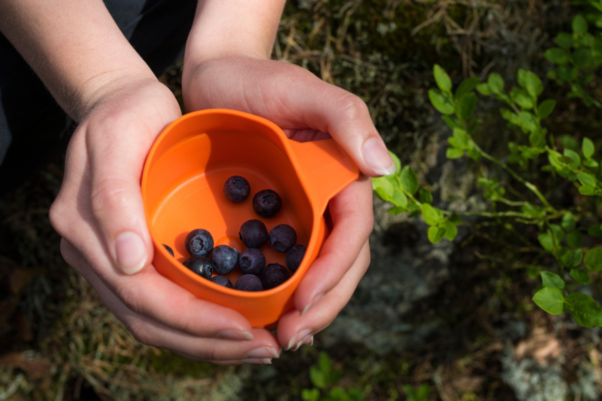 To hender holder frem en orange kopp med blåbær oppi.